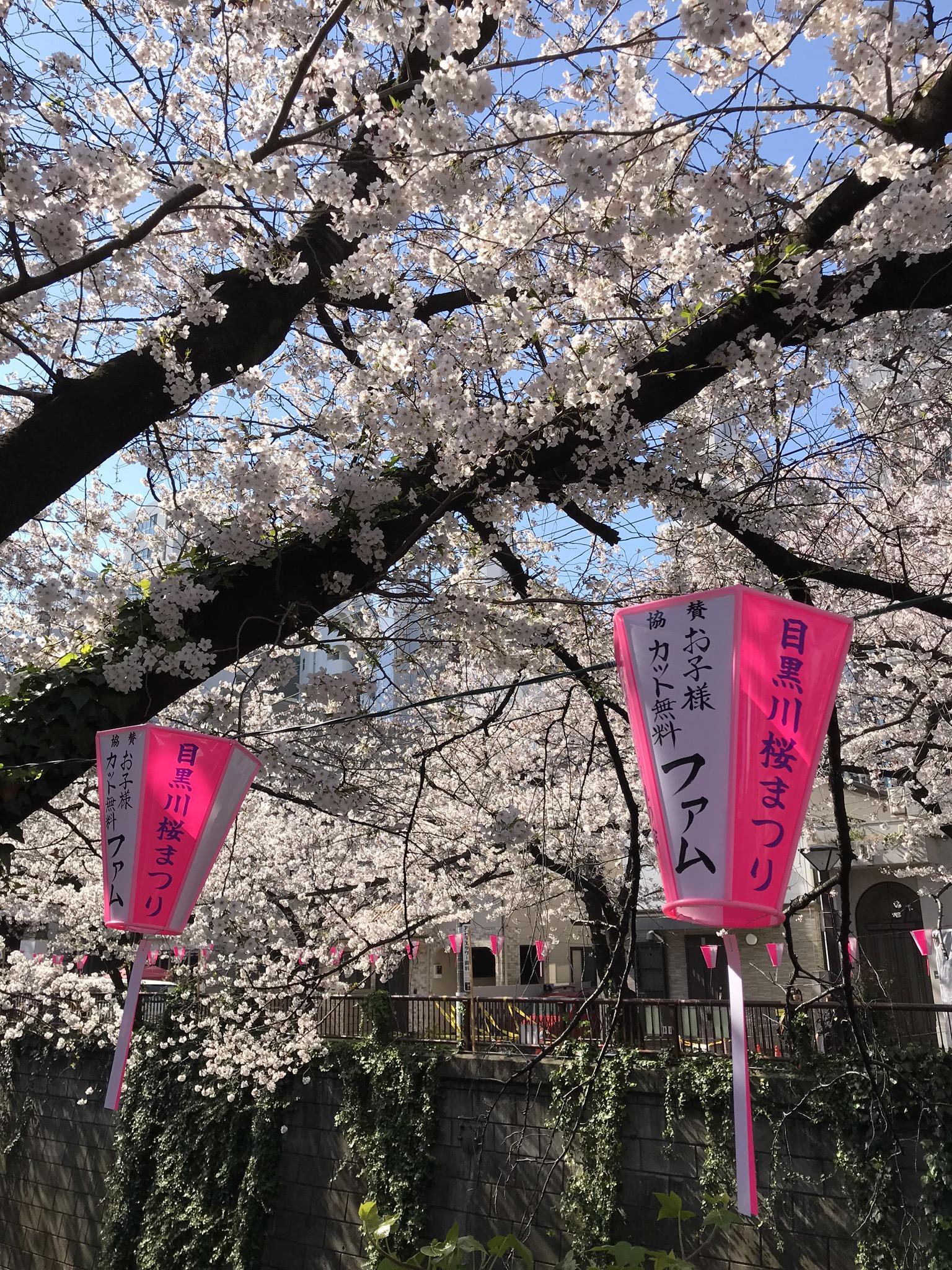 目黒川の桜まつり、famのぼんぼり